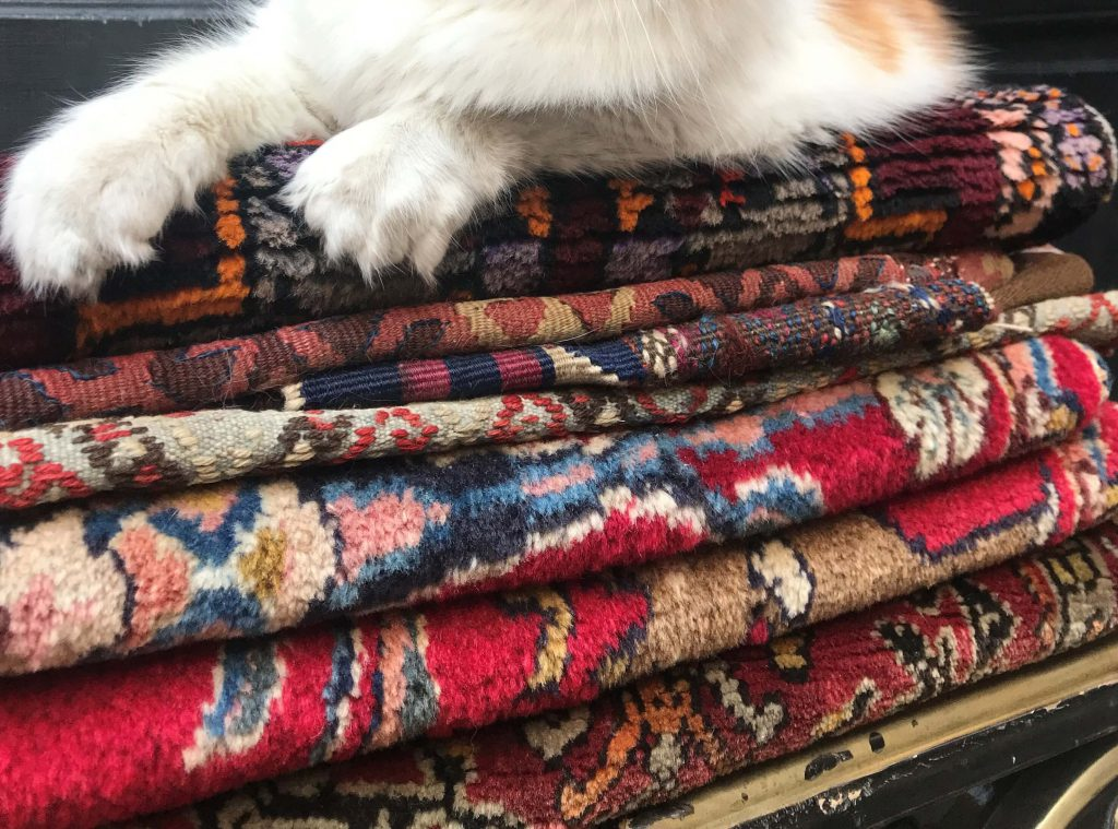 חתול על ערימת שטיחים באיסטנבול